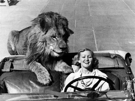 lion car lions tigers and alligators ride shotgun 15 pictures of