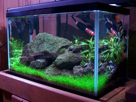 15 best images about aquarium ideas and design on sharks tropical fish and