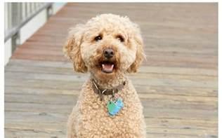 Best Small Dog Breeds for Seniors