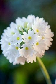 Best white flowers names ideas and images on bing find what you beautiful white flower names mightylinksfo