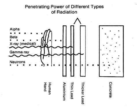 radiation power penetration penetrating types particles different radioactive cells type living most biological alpha nuclear gamma beta body effects damage
