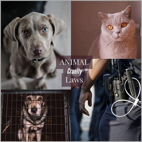 animal abuse laws  massachusettsanimal abuse laws