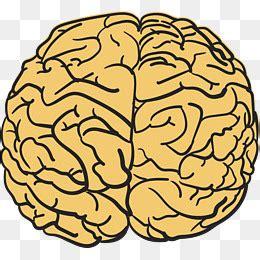 cartoon strongest brain mind map cartoon vector brain