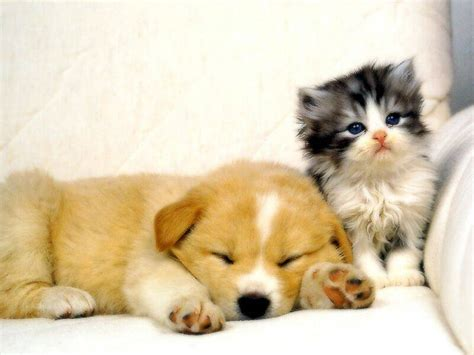 puppy cat a puppy and a cat cats picture