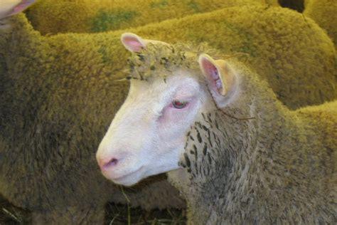 chambre d agriculture yonne la pérennité des exploitations assurée grâce à l élevage