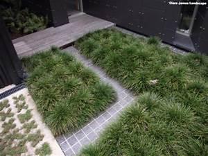 Ophiopogon Mini Mondo Dwarf Grass Groundcover House ...
