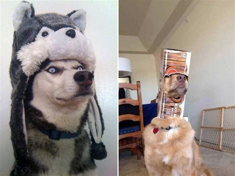 Dogs in Silly Hats