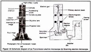 Electron Microscope  Em   Principles And Types