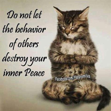 peace cats inner peace cat wisdom