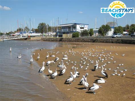hastings beach stays beach  coast accommodation