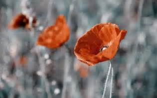 Ziedu fotogrāfijas | Kāzu fotogrāfs INDARS GRASBERGS