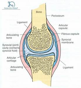Synovial Joint Classification  Definition  U0026 Examples  U00bb How To Relief