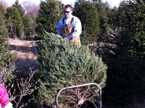 ide christmas tree farm opens friday woodridge il patch