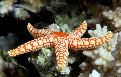 People Having Starfish Sex Porn Pictures