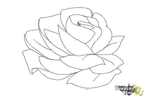draw  rose  pencil drawingnow