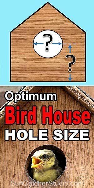 bird house hole size  dimensions