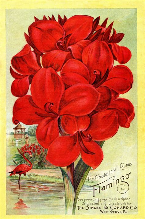 instant art printable seed catalog cover red flowers
