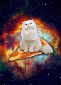 space cats omgcatsinspace
