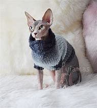 Best Sphynx Cat Ideas And Images On Bing Find What Youll Love