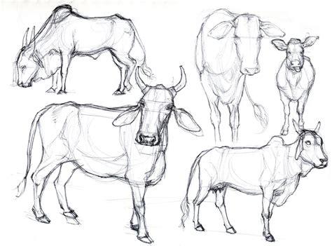 art kimistry animal drawings  reference