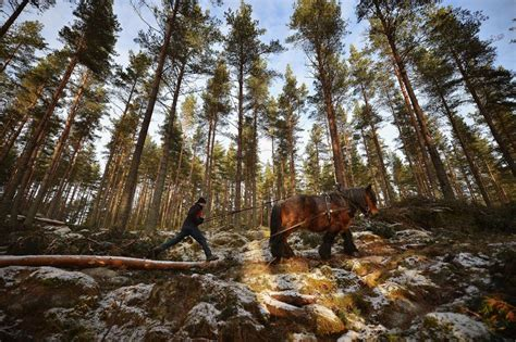 Forestry Jobs, Careers, And Employment
