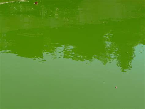 eau verte bassin exterieur la chaleur favorise l eau verte c 244 t 233 jardin