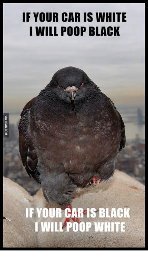 Bird Shit Meme - 25 best memes about bird poop meme bird poop memes