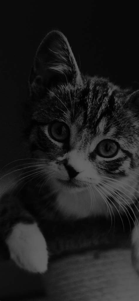 mi36-cute-cat-look-dark-bw-animal-love-nature-wallpaper