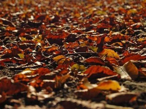 tapis de feuilles mortes poemes de robert casanova vilain vent d hiver
