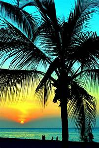 Palm Tree Sunset Pictures, Photos, and Images for Facebook ...