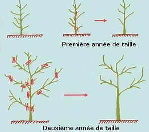 Profondeur Des Racines D Un Figuier : les deux premi res ann es de taille d 39 un olivier fiche plantes ext rieures pinterest ~ Nature-et-papiers.com Idées de Décoration