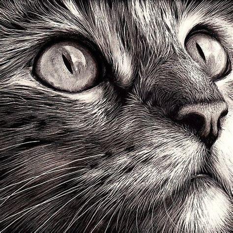 ideas  cat face drawing  pinterest cat