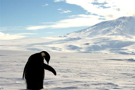 arkema si鑒e social quelle est la différence entre un pingouin et un manchot la croix