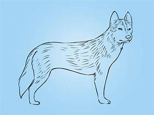 How To Draw A Husky Drawing Pencil