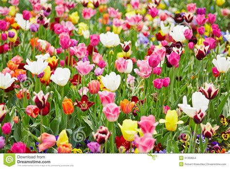 alle verschillende bloemen achtergrond met verschillende bloemen stock foto