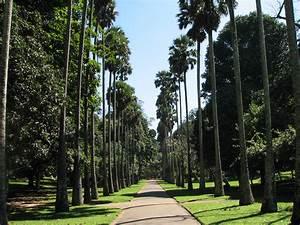 File:Botanical Garden of Peradeniya 05 jpg Wikimedia Commons