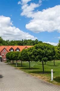 Bäume Für Kübel : b ume g nstig online kaufen bei lorberg online shop f r ~ Michelbontemps.com Haus und Dekorationen