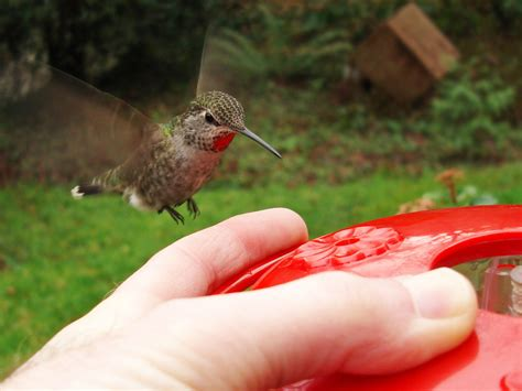 hummingbirds backyard bird shop