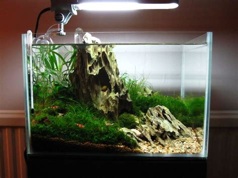 shrimp tank aquascape quot mono quot nano iwagumi with shrimp 12x10x8
