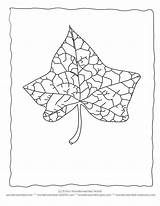 Leaf Coloring Outlines Printable Ivy Popular Leaves Pages Coloringhome sketch template