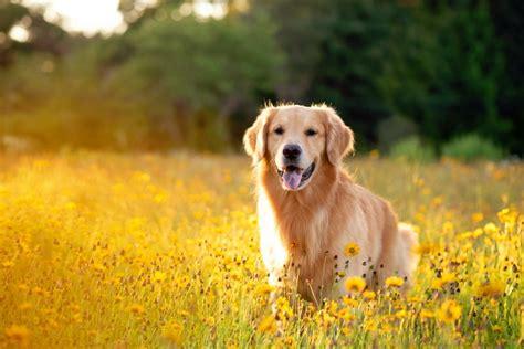 list  dog breeds doggear