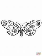 Moth Coloring Pages Drawing Printable Version Insects Supercoloring Categories sketch template
