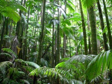 de brazil palm gardens هل تشعر النباتات بالألم سحر الكون