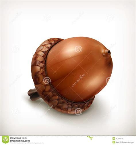 acorn icon stock photo image