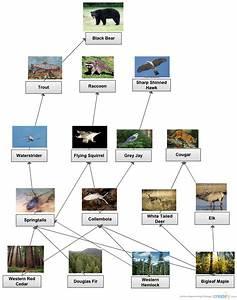 Temperate Rainforest Food Web   Block Diagram