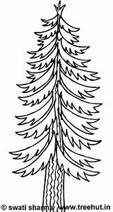Coloring Pages Trees Tree Printable Adult Deodar Clipart Pine Treehut Swati Wednesday Categories July Pm Posted Views sketch template