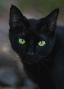 How common are black cats with green eyes? - Quora