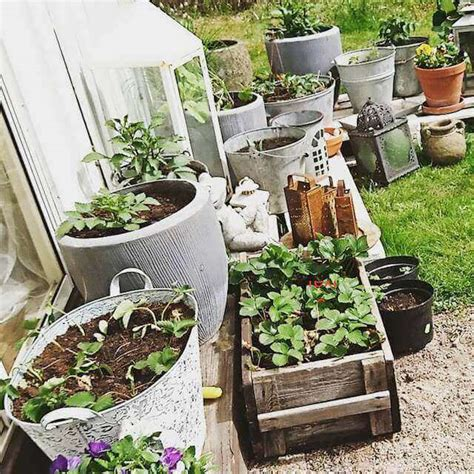 How To Start A Container Vegetable Garden Urban