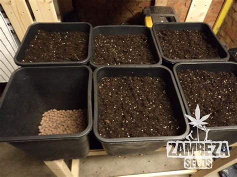 Create Your Own Soil For Your Cannabis Seeds