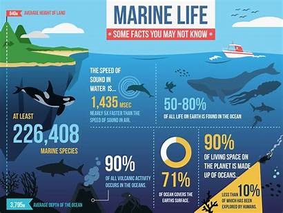 Marine Infographic Facts Oceans Know Briefbox Learning